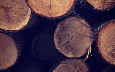Lieferung Eiche Massivholz